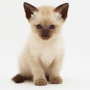 Centro veterinario la minilla - Cuidados gato 1 mes ...